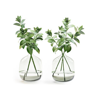 3D herb stem vase water