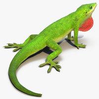 carolina anole lizard rigged 3D model