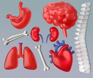 simple anatomy brain 3D model