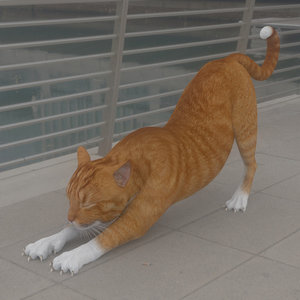 3D cat stretching model