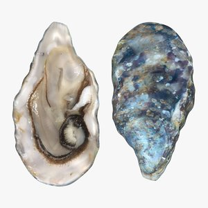 3D live oysters pose 2 model