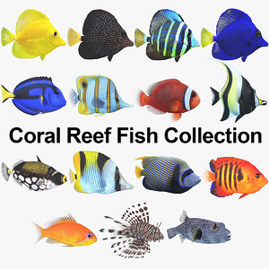 coral reef fish 3D model