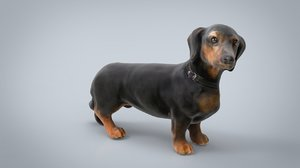dachshund dog animal 3D model