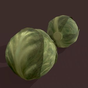 3D cabbage model