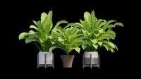 3D dieffenbachia tree vase