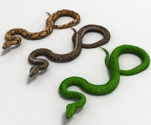 3D model python snake animal