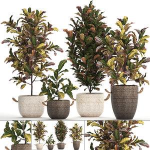 3D houseplants exotic plants croton