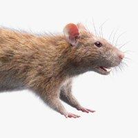 rat fur 2 3D