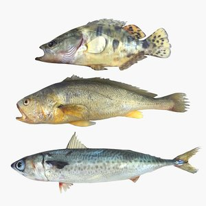 3D fishing mackerel
