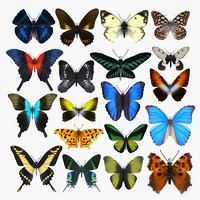 butterfly insect nature 3D model