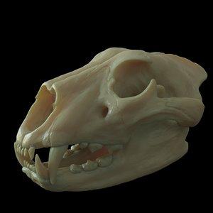 3D lion skull