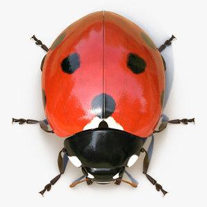 3D ladybug rigged