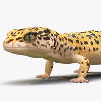Leopard Gecko Rigged for Maya
