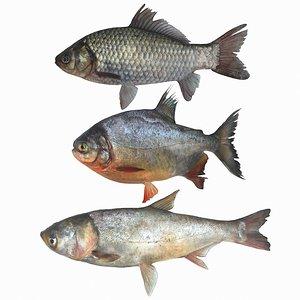 fish animal carp model