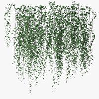 Ivy wall 07