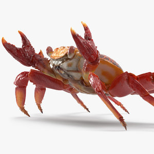 red rock crab rigged 3D model