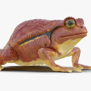 tomato frog rigged 3D model