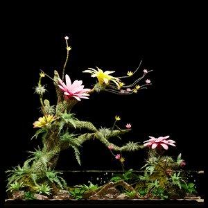 3D paludarium | vivarium aquarium