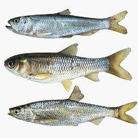 3D model fish animal carp