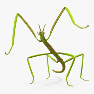phasmatodea stick insect rigged model