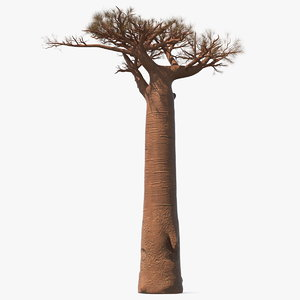 3D model leafless baobab