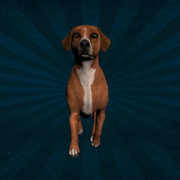 ANML-007 Dog - Animated