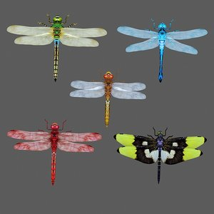 3D dragonfly dragon fly