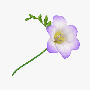 freesia flowers plant 3D