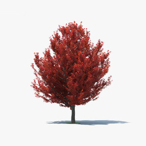 3D red maple model