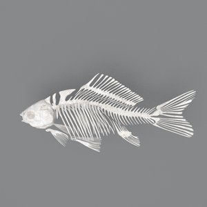 fish skeleton structure 3D