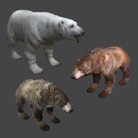 3D 3 bear polar brown