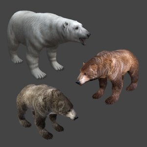 3D 3 bear polar brown