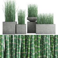3D equisetum hyemale horsetail grass plant model