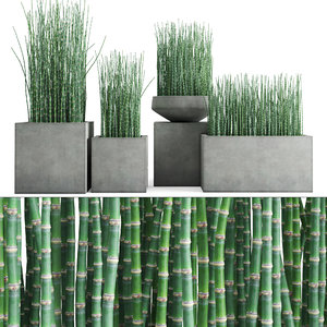 3D equisetum hyemale horsetail grass plant model