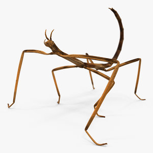 3D stick insect brown rigged model