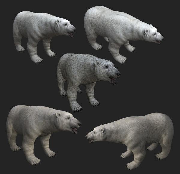 3D polar bear games animation