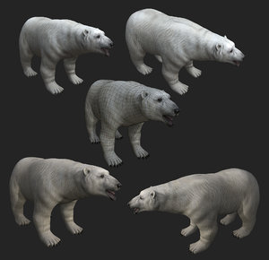 3D polar bear games animation