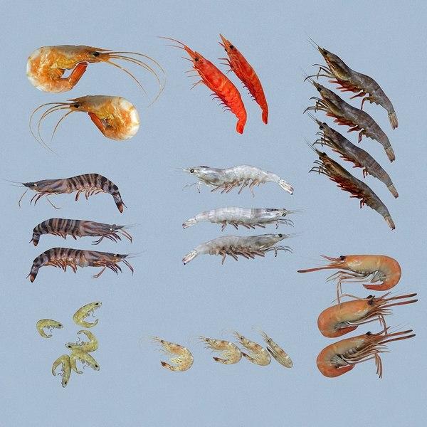 shrimp animal crustacean 3D