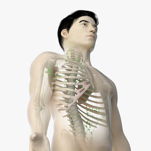 3D model skin asian male skeleton