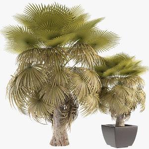 3D houseplants exotic plants model