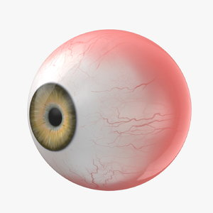 eye rigged - model