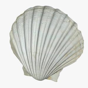 3D sea shell model
