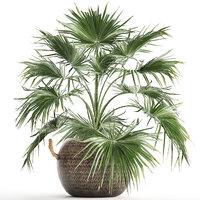 3D houseplants fan palm
