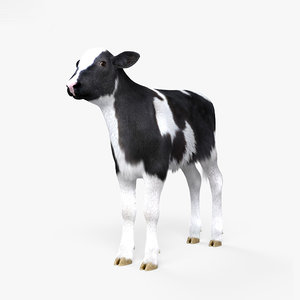 calf cow cattle 3D model