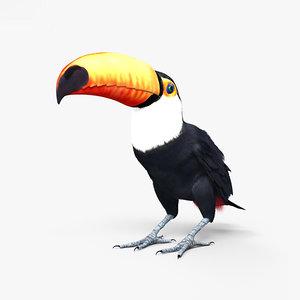 toco toucan 3D