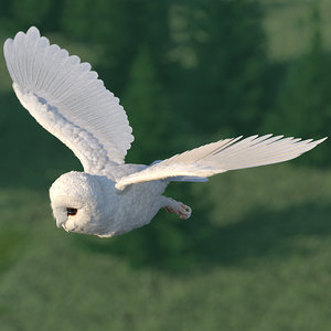 3D model white barn owl rigged