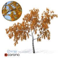 birch tree autumn version 3D model