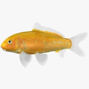 kigoi koi fish 3D