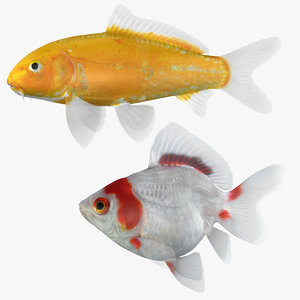 goldfish fish 3D