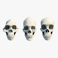 3 Skulls collection Neanderthal Human and Australopithecus Set